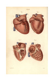 Sections of the Heart Giclee Print