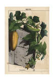Fruits Giclee Print