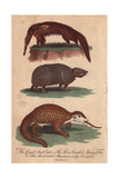 Great Anteater, Three-Banded Armadillo and Short-Tailed Giclee Print