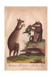 Kangaroo, Badger and Opossum Macropus Giganteus, Meles Meles, Didelphis Virginiana Giclee Print