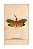 Chinese Lanthorn Fly or Lantern FlyPyrops Candelarius Giclee Print