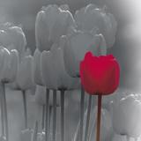 Tulip Accent II Giclee Print by Katja Marzahn