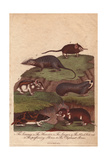 Lemming, Hamster, Songar Rat, Blind Mole-Rat, Perfuming Shrew, and Elephant Giclee Print