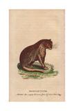 Brasilian Tiger Panthera Onca Giclee Print
