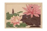Lotus Flower, Nelumbo Nucifera Giclee Print