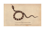 Black and White Indian Snake Giclee Print
