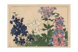 Larkspurs, Delphinium Elatum Giclee Print