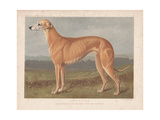Greyhound -Lauderdale- in Front of Fields and Forests Giclee Print