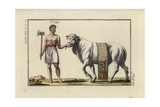 Sacrificial Bull Led to Sacrifice by an Axe-Wielding Man in Laurel Wreath after a Roman Triumph Giclee Print