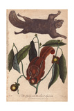 Flying Squirrel and Striped Squirrel, Glaucomys Sabrinus and Tamias Striatus Giclee Print