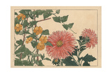 China Aster, Callistephus Chinensis, and Black-Eyed Susan Vine, Thumbergia Alata Giclee Print