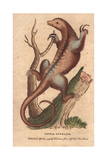 Little Anteater or Silky Anteater Cyclopes Didactylus (Myrmecophaga Didactyla) Giclee Print