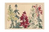 Snapdragon Varieties, Antirrhinum Majus Giclee Print