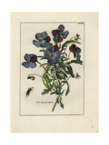Violet with Beetle Giclee Print
