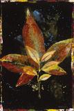 Botany Pride II Giclee Print by  Georgie