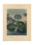 The Blue Egyptian Water Lily Giclee Print