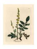 Agrimony Giclee Print by James Sowerby