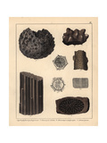 Extinct Coral and Sponge Fossils Giclee Print