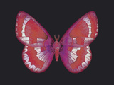 Summer Butterfly II Giclee Print by Sophie Golaz