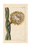 Cactus Grandiflorus with Large Yellow Flower Giclee Print