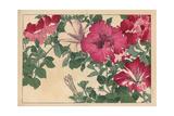Petunia Varieties Giclee Print