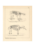 Skeleton of the Megatherium and Mastodon Giganteus Giclee Print