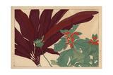 Poinsettia, Euphorbia Pulcherrima, and Shrubby Dracaena Giclee Print