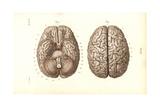 Brain Giclee Print