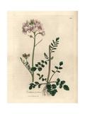 Pink Flowered Ladies Smock or Cuckow-Flower, Cardamine Pratensis Giclee Print by James Sowerby