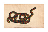 Surinam Amphisboena or Tropical Worm Lizard Giclee Print