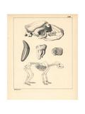 Skeleton of the Cave Bear, Ursus Spelaeus Giclee Print