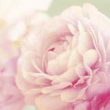 Bloom Giclee Print by Shana Rae