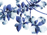 Abloom Giclee Print by Jackie Battenfield