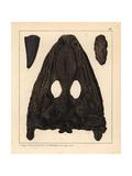 Mastodonsaurus Fossils Giclee Print