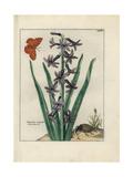 Hyacinth Giclee Print