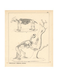 Skeletons of the Missourium and Mylodon Giclee Print