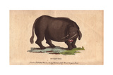 Sukotyro, Mythical or Extinct Giclee Print