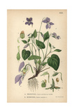 Dog Violet, Viola Riviniana, and Heath Dog Giclee Print
