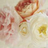 Bouquet III Giclee Print by Shana Rae