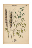 Grains Giclee Print
