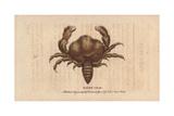 Hairy Crab Giclee Print