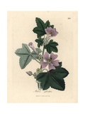 Purple Flowered Mallow, Malva Sylvestris Giclée-tryk af James Sowerby