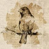 Bird Study IV Posters by Lanie Loreth