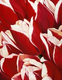 Most Beautiful Tulip V Prints by Yvonne Poelstra-Holzaus
