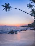 Palm Tree at Sunset on Tropical Mirissa Beach Reproduction photographique par Matthew Williams-Ellis