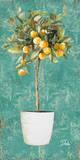 Essential Compliment I Poster von Patricia Quintero-Pinto