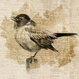 Bird Study II Posters by Lanie Loreth