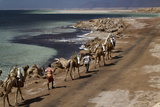 Salt Caravan in Djibouti, Going from Assal Lake to Ethiopian Mountains, Djibouti, Africa Fotografisk tryk af Olivier Goujon