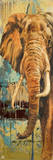 New Safari on Teal II Poster av Patricia Quintero-Pinto