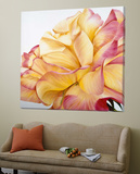 Beautiful Rose Prints by Yvonne Poelstra-Holzaus